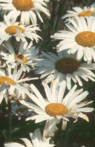 White Flowers Names. Here is a list of flower names along with .